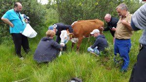 Vores medlemmer tog sig kærligt af kvien og fodrede den mens kloven blev renset | Foto: Hanne Clausen